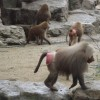 The Solution: How Lessons From The Bare-Assed Monkey Can Help Us End Obesity.